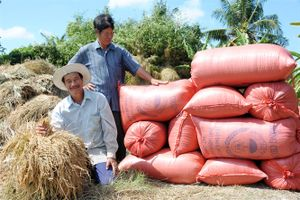 Nông dân ĐBSCL trúng mùa lúa - tôm, nông dân phấn khởi