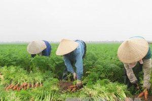 Nông sản sạch đắt hàng dịp Tết