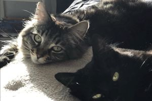 Người đàn ông thuê căn hộ 35 triệu đồng/tháng chỉ để cho 2 chú mèo ở