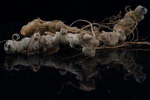 Triển lãm 'Di sản văn hóa, sâm Ngọc Linh - báu vật đại ngàn'