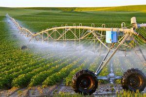 Bài cuối: Cần phải chuyển đổi hệ thống thực phẩm toàn cầu