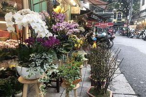 Hoa Lan khoe sắc trên phố phường Hà Nội