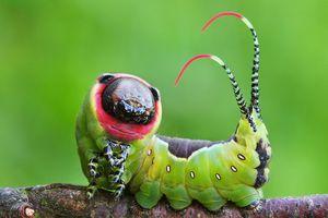 5 loài côn trùng diện mạo kỳ lạ