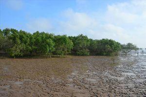 Sai phạm nghiêm trọng tại các dự án trồng rừng ven biển Sóc Trăng