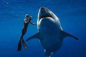 Lộ diện cá mập trắng lớn nhất thế giới đang có 'đại tiệc' cá voi
