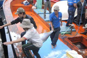 Bội thu đầu năm, ngư dân Bình Định chuẩn bị chuyến biển xuyên tết