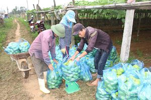 Một xã ở Nghệ An thu 20 tỷ đồng từ su su
