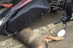 Hà Tĩnh: Chó lạ lao vào cắn 10 người giữa chợ
