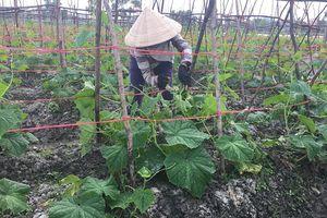 Quảng Bình: Người dân Quảng Long tất bật lo hoa tết
