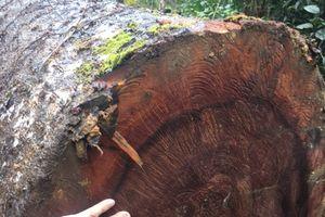 Rừng phòng hộ đầu nguồn ở Quảng Ninh bị chặt phá: Chủ tịch xã khẳng định không có việc phá rừng