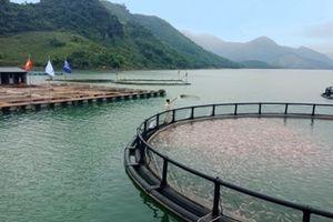 Triển vọng nuôi trồng thủy sản xuất khẩu với sự vào cuộc của doanh nghiệp