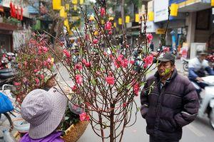 Tết đến, ghé chợ hoa truyền thống của người Hà Nội