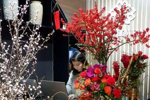 Cành hoa cây dại bên tây, về Việt Nam sang chảnh chục triệu