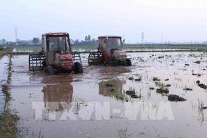 Gần 46% diện tích đã có nước cho gieo cấy