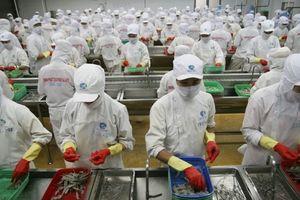 Cổ đông 'vua tôm' Minh Phú sắp đón 'mưa cổ tức' trước thềm bán vốn cho đối tác Nhật Bản