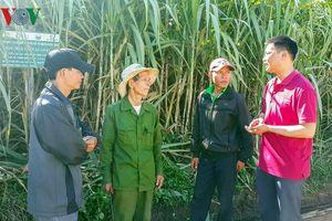 Góp đất làm cánh đồng lớn: Người Ba Na từng bước xóa nghèo