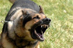 Chó 30kg cắn rách mặt bé gái 6 tuổi ở Nam Định