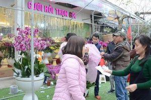 Một cây Lan Hồ Điệp giá triệu bạc nhưng khách vẫn mua tới tấp để chơi Tết