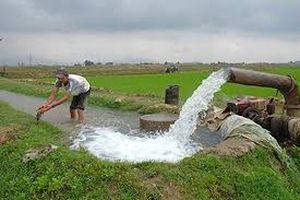 Trên 45% diện tích đã có nước gieo cấy