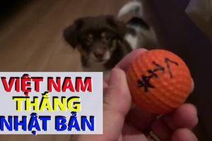 Cún cưng dự đoán Việt Nam đánh bại Nhật Bản ở tứ kết Asian Cup