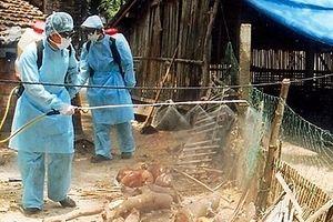 Hà Nội triển khai công tác phòng, chống dịch bệnh gia súc, gia cầm năm 2019
