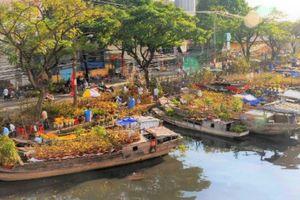 Sài Gòn vàng rực bởi hoa Mai xuống phố