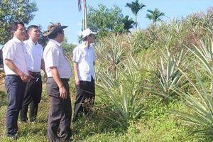 Mô hình kinh tế nông - lâm nghiệp ở Trà Bồng: Hiệu quả khả quan