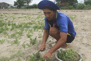 Ninh Thuận: Đất và nước nhiễm mặn, do đâu?