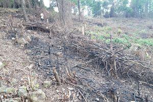 Quảng Trị: Doanh nghiệp để mất 1.000ha rừng vẫn được khen thưởng