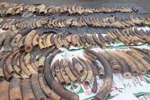 2 tấn ngà voi và vảy tê tê giấu trong lô gỗ gõ