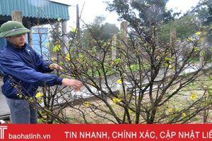 Tết này, làng trồng mai duy nhất Hà Tĩnh 'trúng đậm'