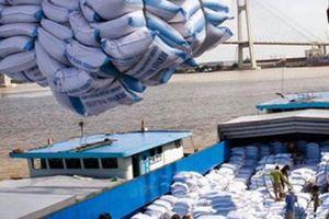 Các cường quốc xuất khẩu gạo châu Á cạnh tranh trong 'cuộc đua' mới