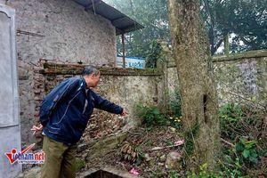 Bất ngờ lộ cây sưa đỏ trăm tuổi được cả làng giấu kín
