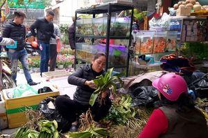 Phố Hoàng Hoa Thám – nơi thỏa niềm đam mê sinh vật cảnh
