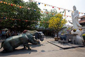 Tê giác, voi quỳ 'kêu cứu' trước tượng Phật ở Sài Gòn