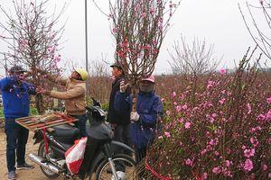 Sôi động thị trường hoa, cây cảnh Tết