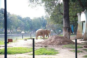 Vườn thú Hà Nội sẵn sàng phục vụ du khách vui Xuân Kỷ Hợi 2019