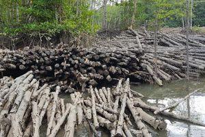 'Băm nát' rừng phòng hộ Long Thành: Cơ quan công an vào cuộc điều tra