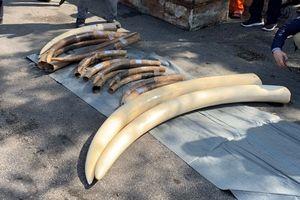 Hải quan lại bắt ngà voi, vảy tê tê tại cảng Hải Phòng