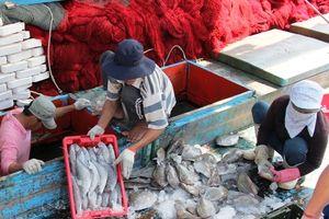Ngư dân miền Trung bội thu chuyến biển cuối năm