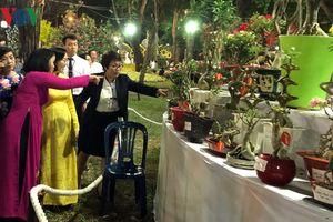 'Kỳ hoa, dị thảo' trưng bày tại Công viên Tao Đàn dịp Tết Kỷ Hợi 2019