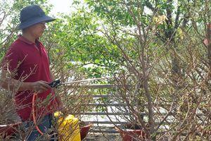 Phố hoa xuân ven sông khô hạn, người dân mua nước bình để tưới tạm