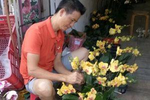 Hoa Tết: Dân Sài Gòn đổ xô mua lan Hồ Điệp tiền triệu ngắm cho đã