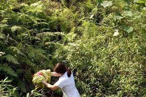 Bác sĩ đỡ đẻ cho sản phụ dưới khe núi sâu 10 mét