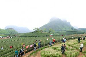 Quy hoạch chung xây dựng Khu du lịch quốc gia Mộc Châu