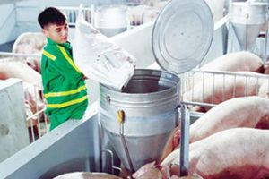 Masan Nutri-Science: Doanh nghiệp lớn nhất VN về chuỗi giá trị thịt