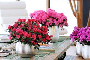 Gợi ý chọn hoa chơi Tết vừa đẹp vừa tốt cho sức khỏe