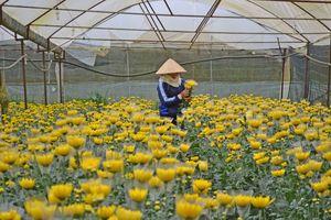 Làng Việt ngày Tết: Làng hoa 'khai sơn phá thạch' ở xứ sở ngàn hoa Đà Lạt