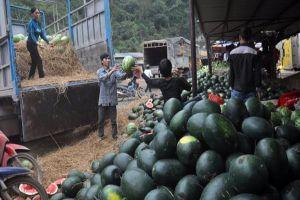 Xuất khẩu dưa hấu sang Trung Quốc phải dùng chất liệu đệm, lót không gây hại