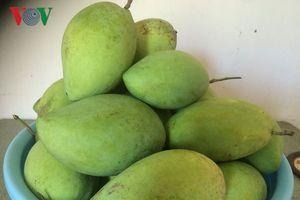 Cận Tết, nhiều loại trái cây đặc sản cao giá, hút hàng